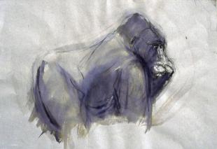 Apunte de Gorila I